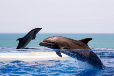 イルカとクジラの違いは大きさだけ⁉ 実は仲間だったって知ってた?