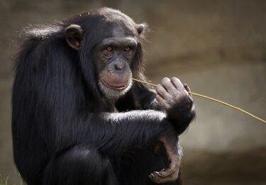 頭のいい動物「5選」こんなにも動物は頭がよかったのか